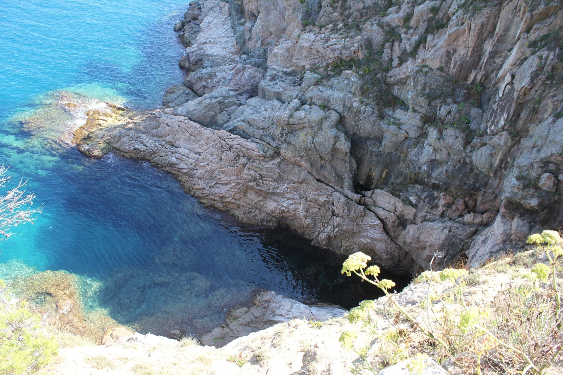 Flower above rock and sea