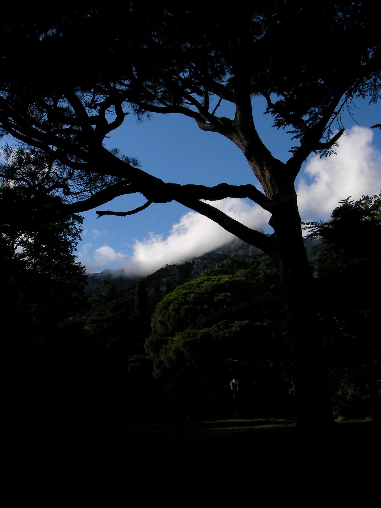 Sötét fa a parkban és Cloudscape