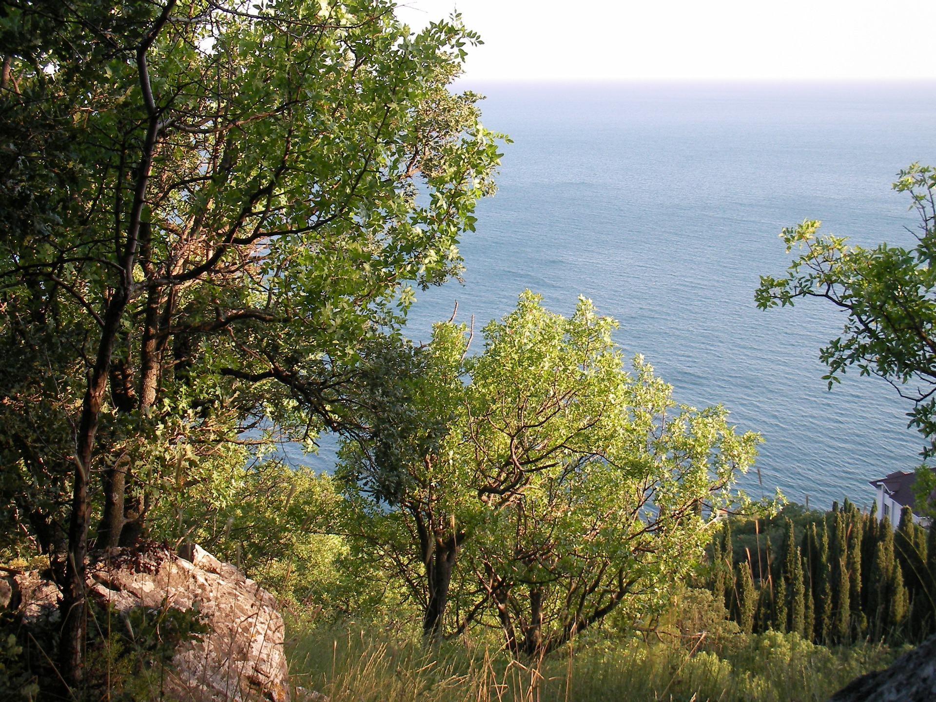 Grønne træer og sten over havets