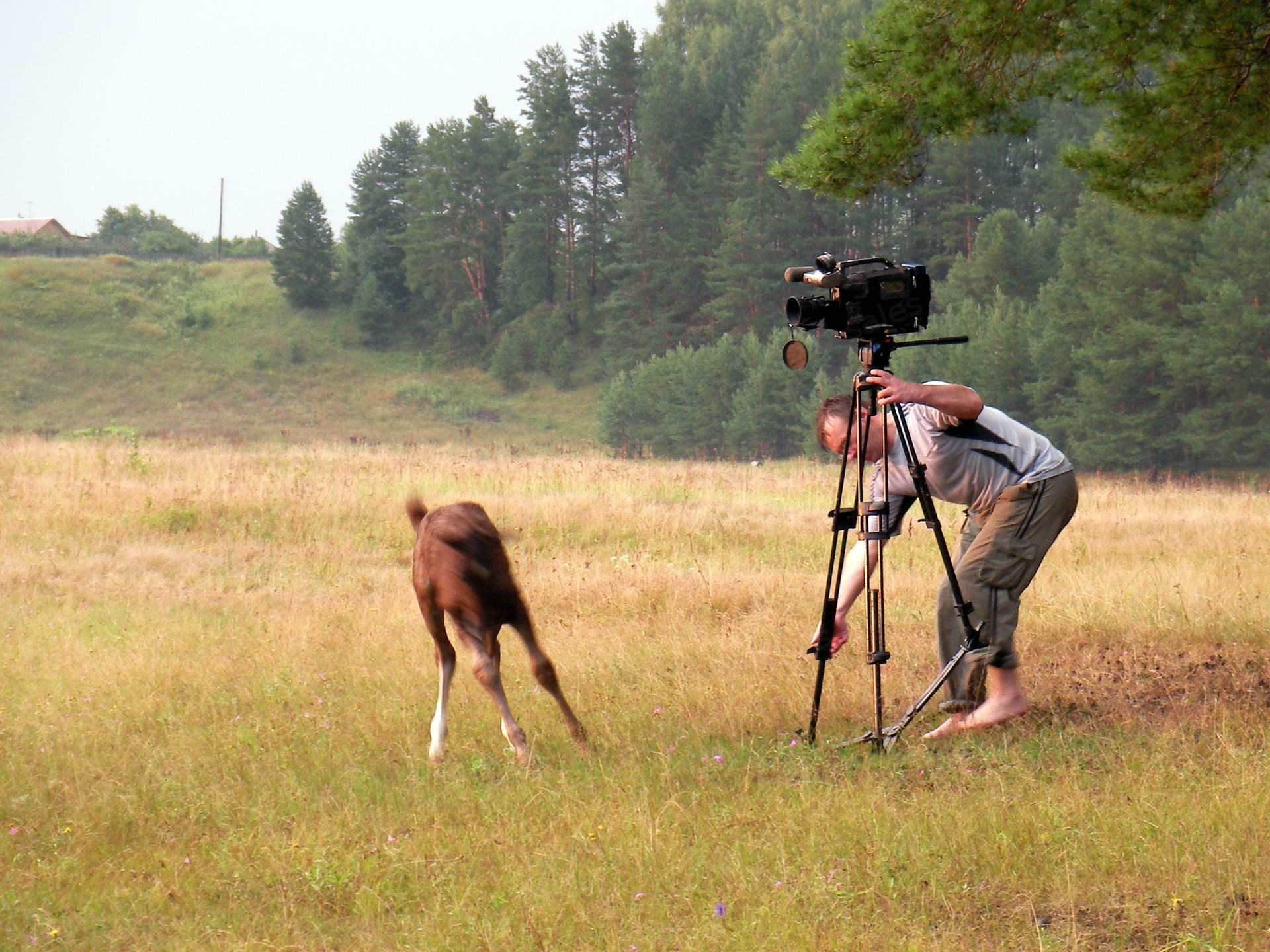 Horse foal was afraid and runs away from videographer