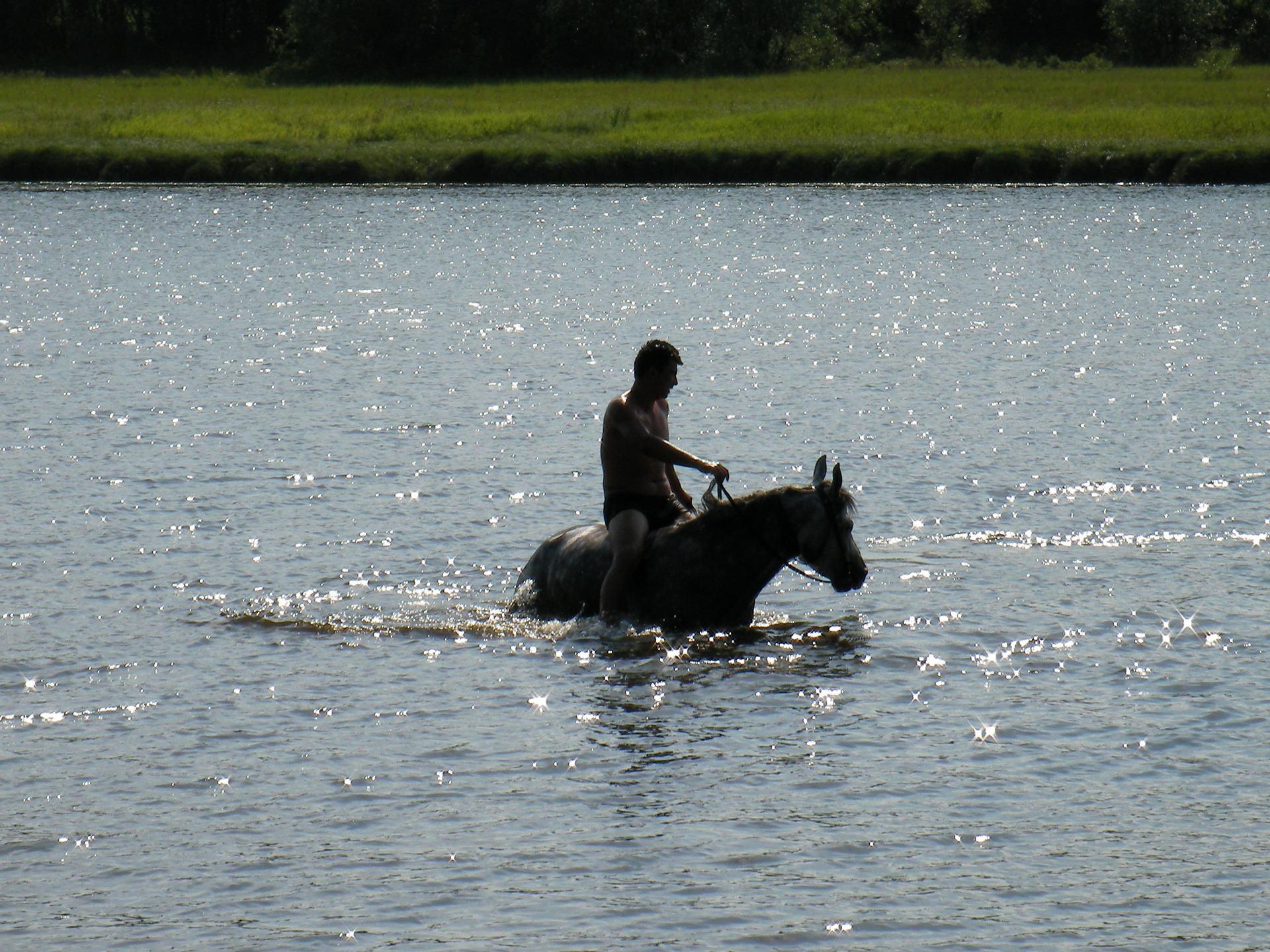 男子在水中的马