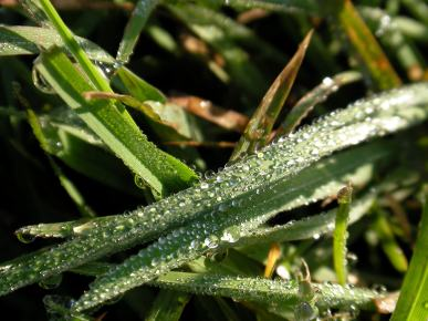 Krople rosy na trawie