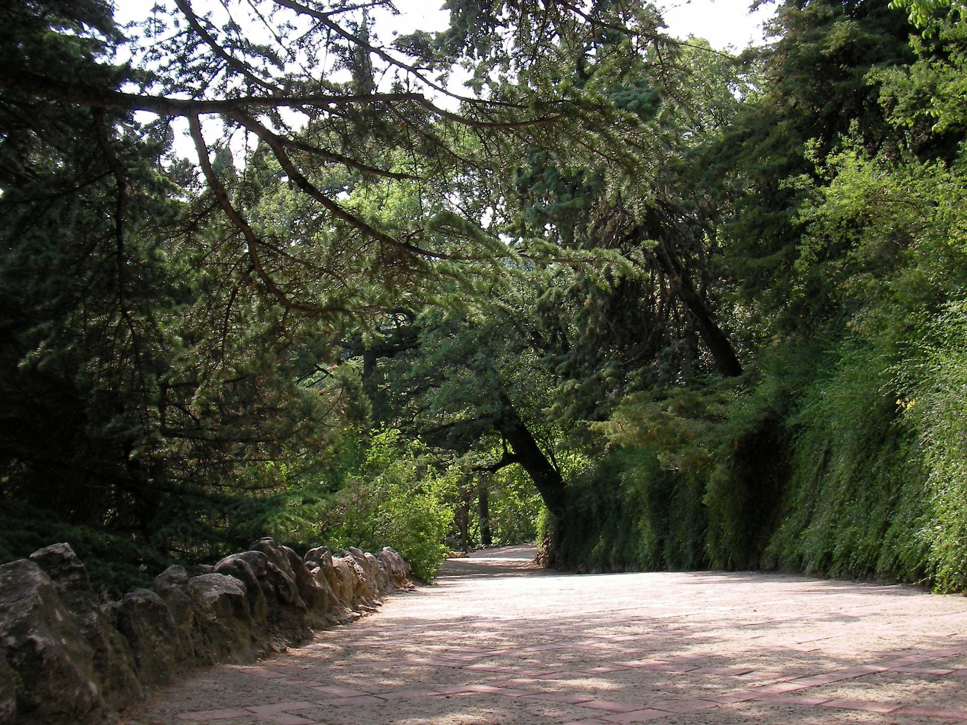 Kelias tarp medžių