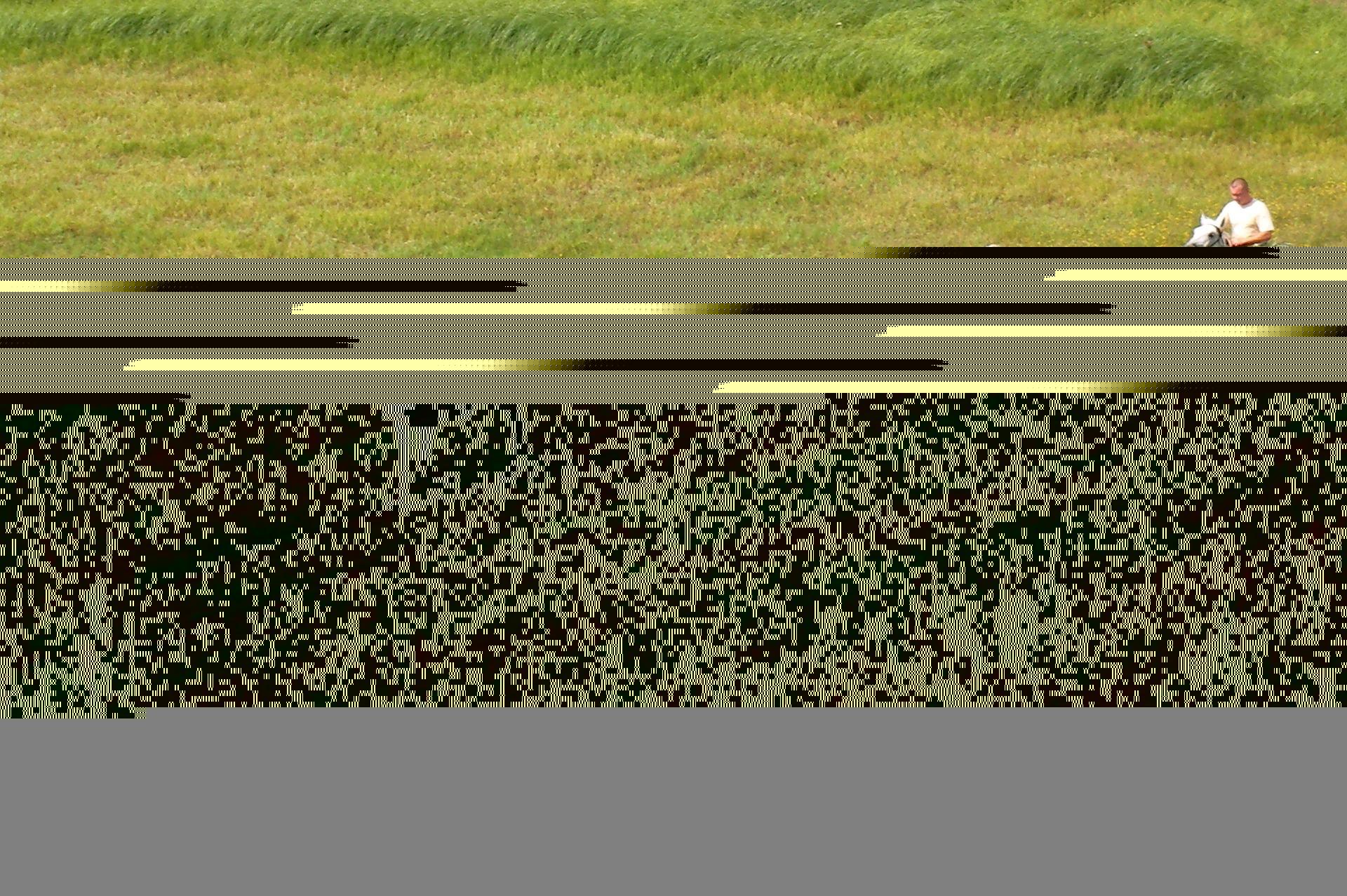 Ihmiset hevosille