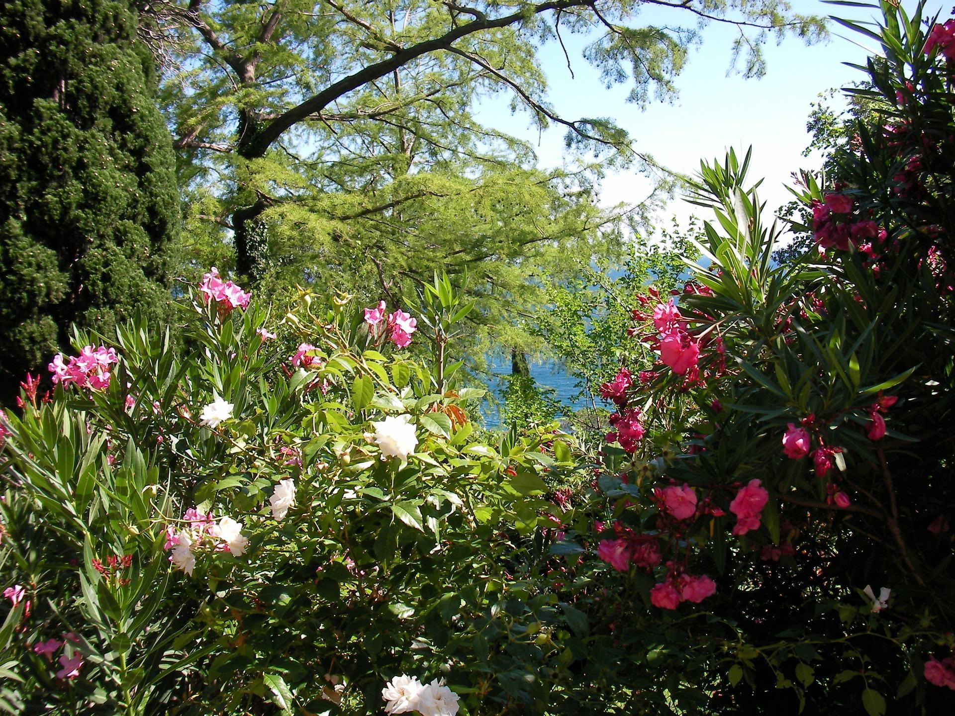 Raudonos ir baltos gėlės ant žalių medžių fone, per kurią spindi danguje ir mėlyna jūra
