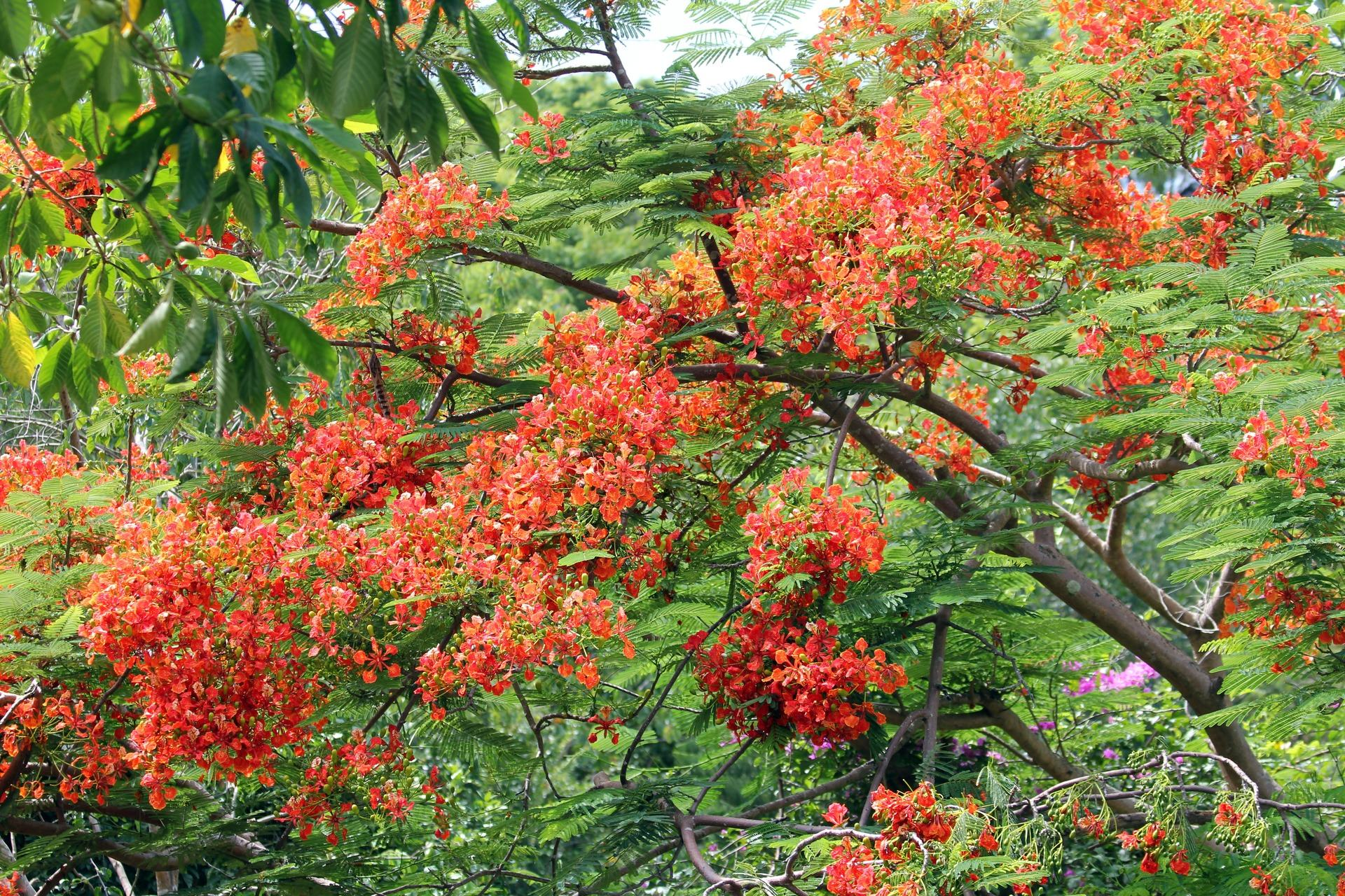 Red flowers on green trees, background