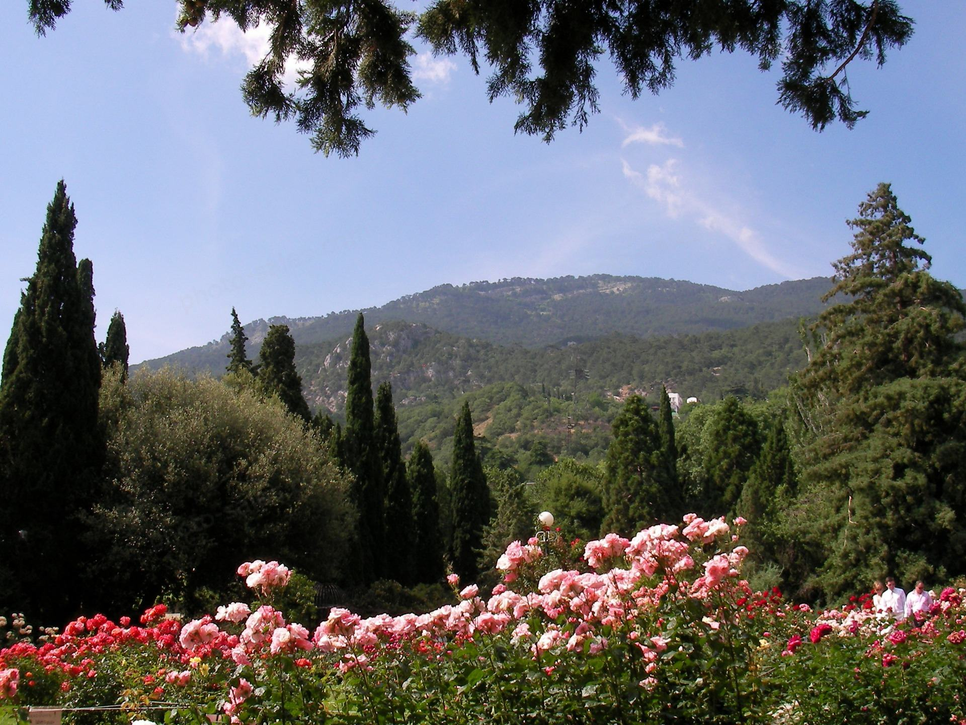 Roses and cypress before mountain under blue sky