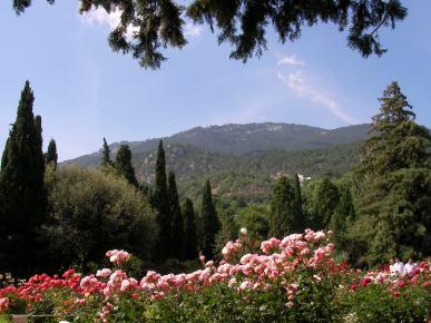 Rosor och cypress före berg under blå himmel