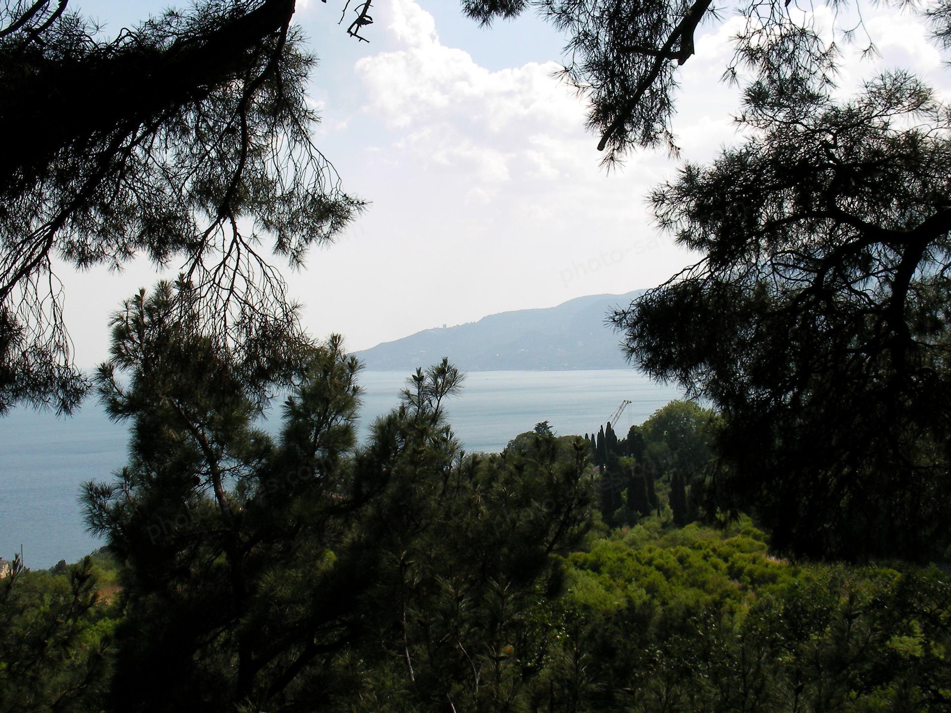 सागर और देवदार शाखाओं के माध्यम से आकाश के नीचे पहाड़ों