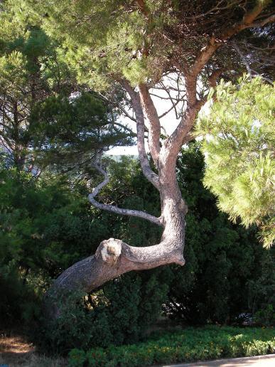 spiral träd