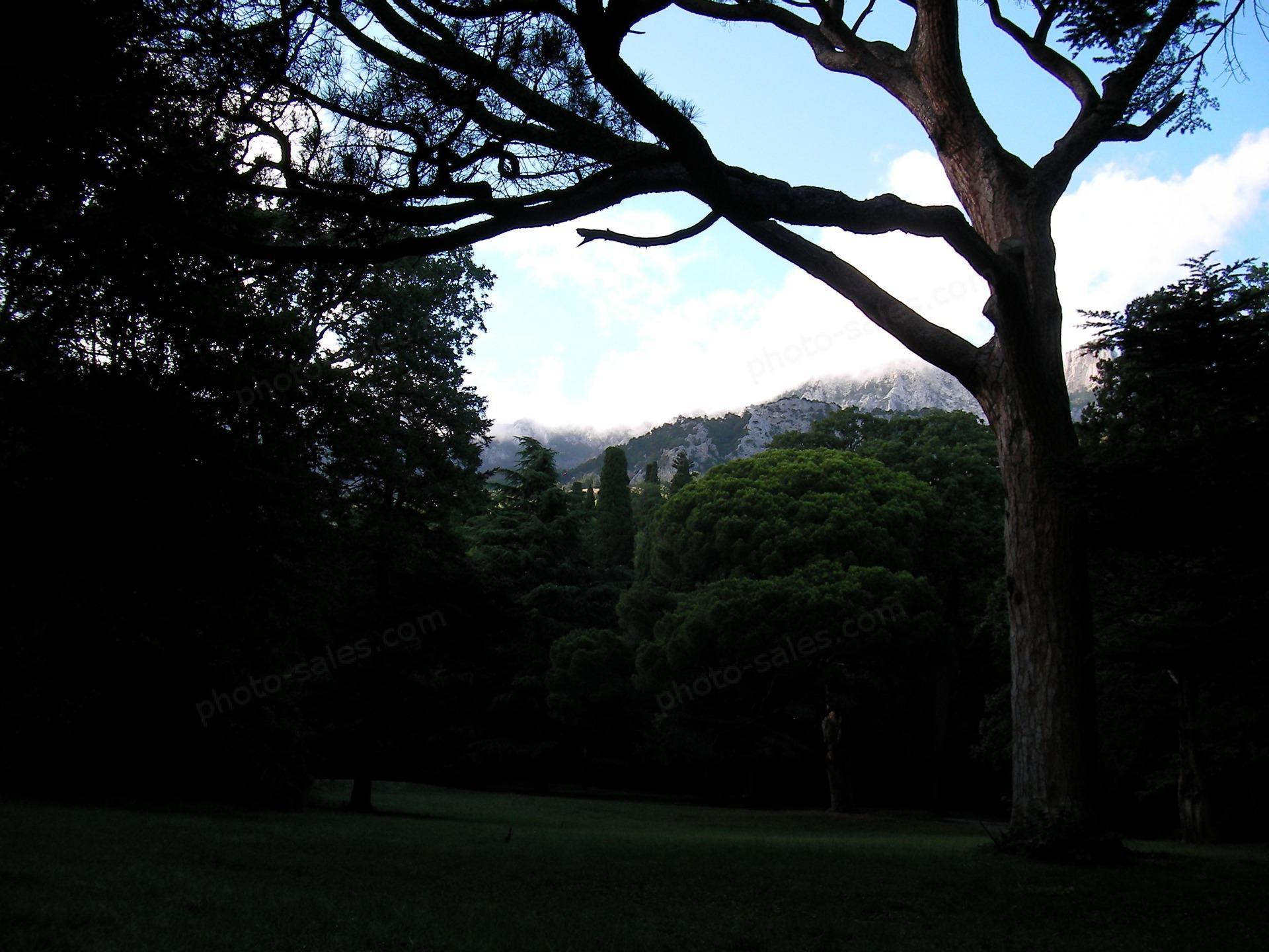 Tree in Vorontsov park, Crimea