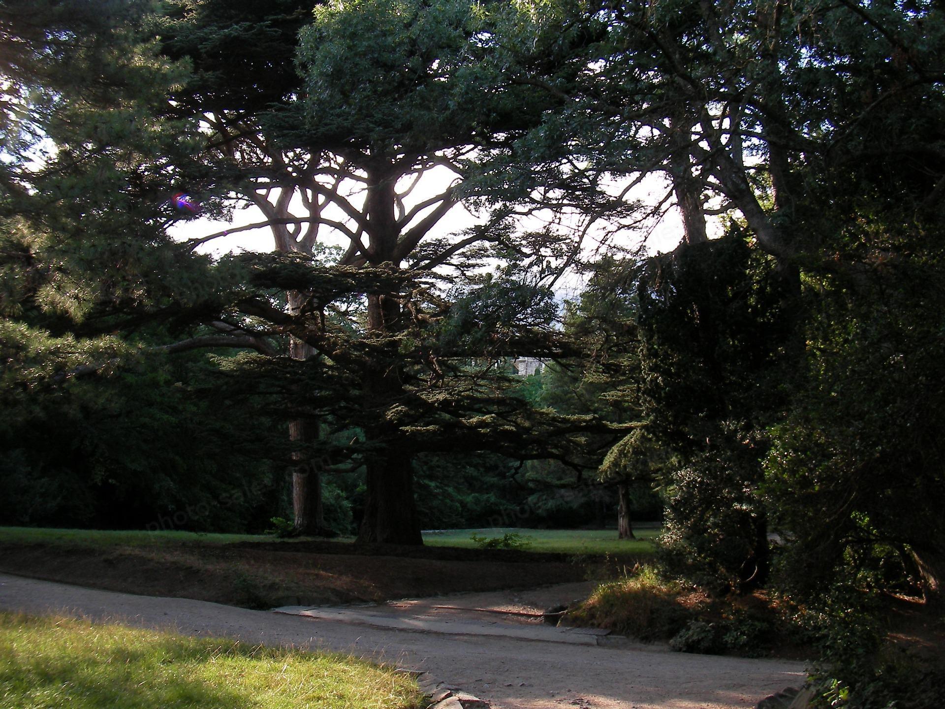 Vorontsov park i Alupka, Krim