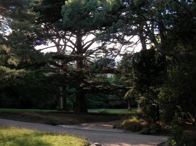 Vorontsov park in Alupka, Crimea